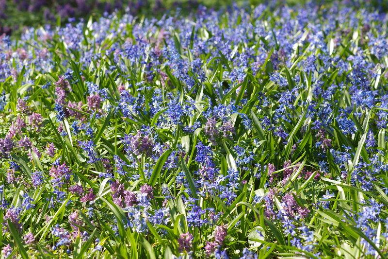 Весна в Аптекарском огороде