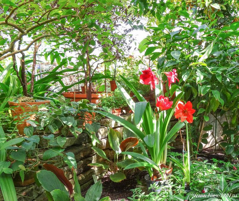 Цветочки, плющи, листья - невозможно выделить взглядом отдельное растение. Всё сливается в какой-то зелёный ковёр.
