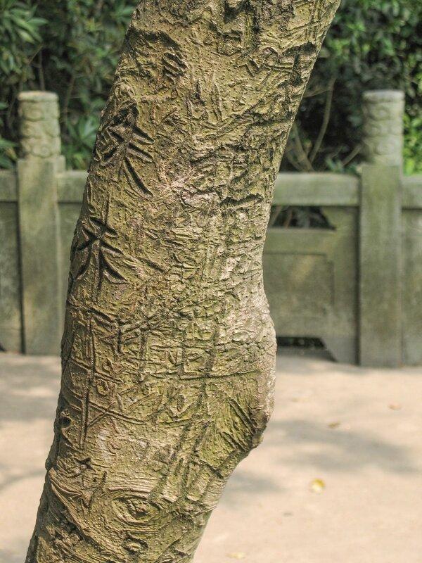 Кора с иероглифами