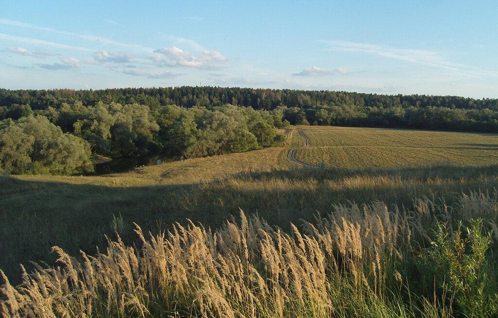 ивы и травы