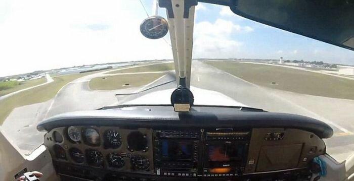 Столкновение самолета с гусем (9 фото)