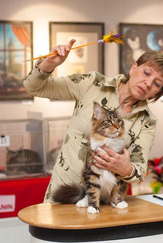 """Международная выставка кошек AFC """"Удивительные лесные кошки"""", 1 марта 2014 г. Сургут 0_b25fa_c02b8437_L"""