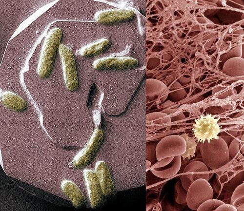 прибор от паразитов на шею