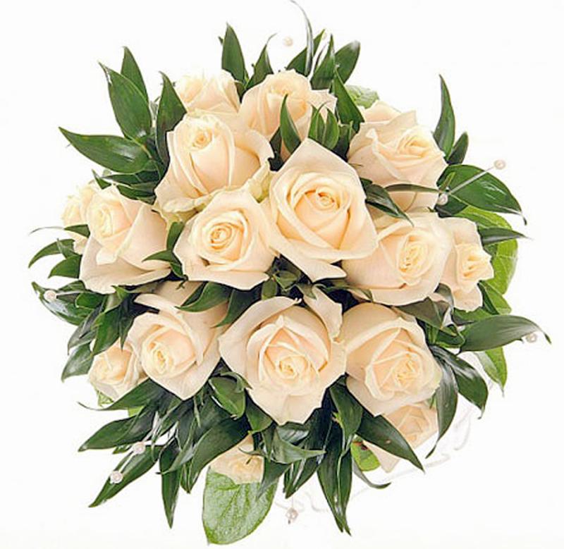Про, картинки цветы розы белые и бежевые
