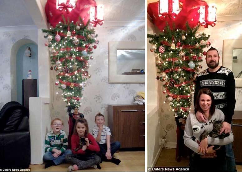 Кошка вынудила хозяев установить елку на потолке