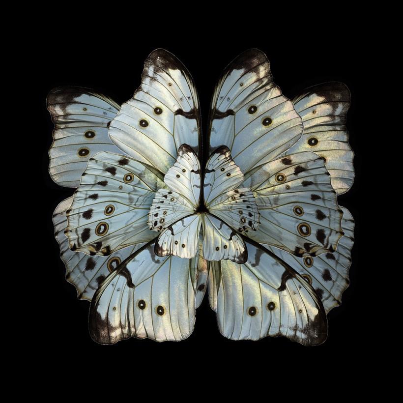 Имитация мимикрии. Цветы из крыльев бабочек