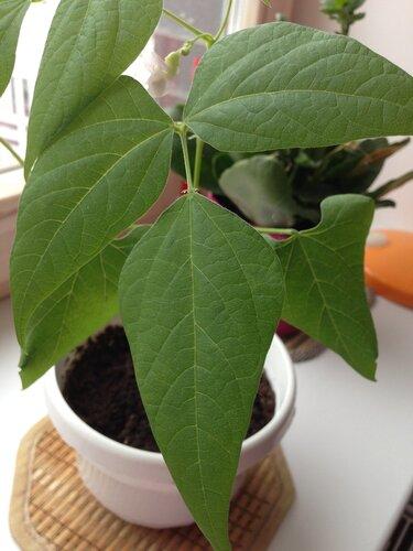 Листья выросли до своего обычного размера