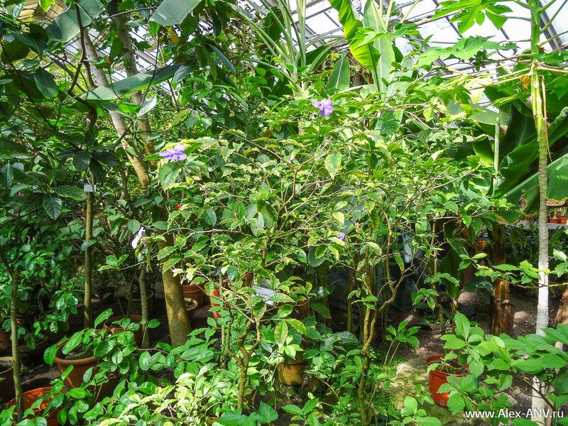 Заканчиваем экскурсию по Тропическому маршруту в оранжереях Ботанического сада.
