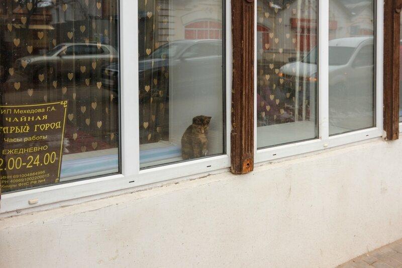 Грустный котенок в окне Чайной, Кимры