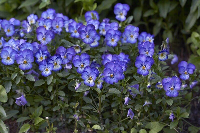 Ботанический сад на пр. Мира. Часть III