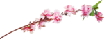 Розовый цветочный