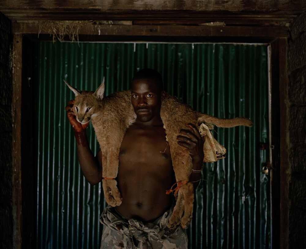 Егерь с застреленной рысью, Южная Африка