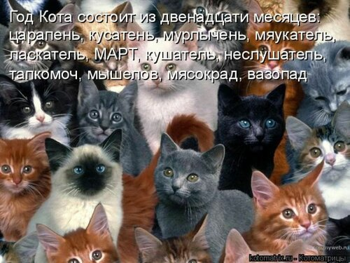 69542742_kotomatrix_08.jpg
