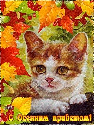 С Осенним приветом!! открытка поздравление картинка