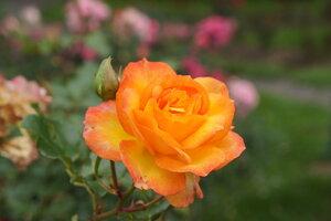 http://img-fotki.yandex.ru/get/9830/50728171.1a7/0_b156e_8ee990ea_M.jpg