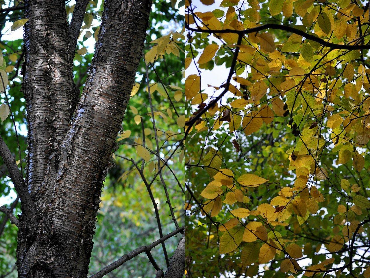 дерево1.jpg
