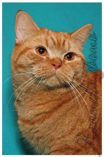 Лаптева-фото - Фотографии животных для питомников и заводчиков 0_e1b7e_d977a950_L