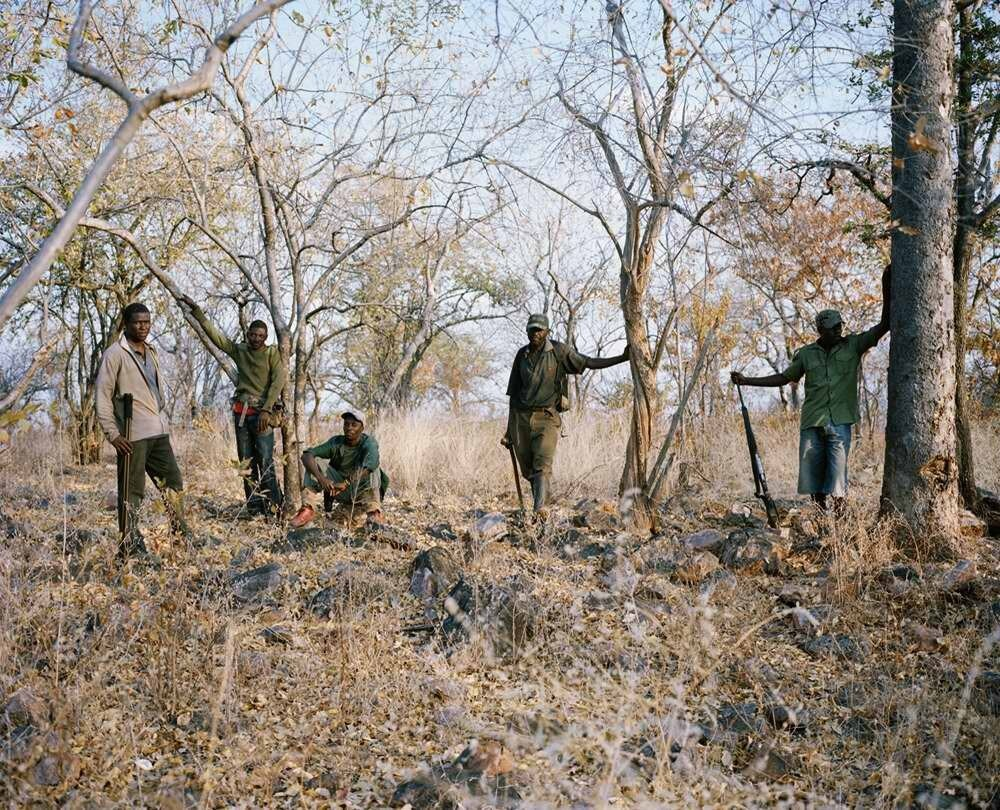 Группа местных егерей, Зимбабве