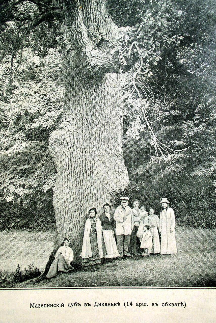 Мазепинский дуб