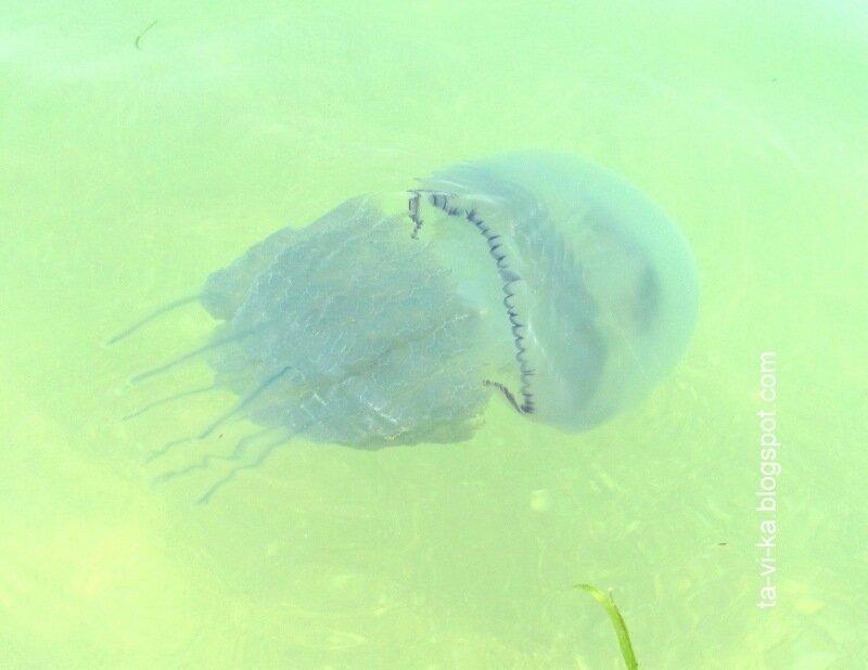 какие дети у медузы