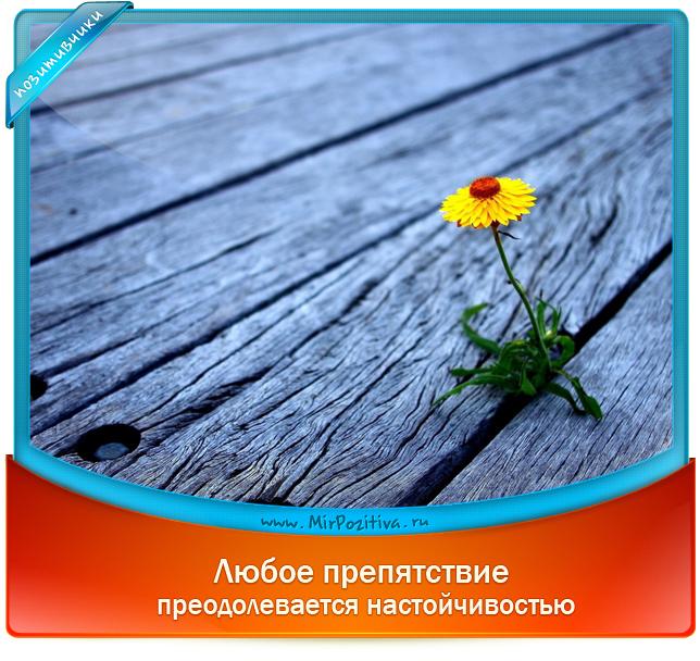 позитивчик:  Любое препятствие преодолевается настойчивостью