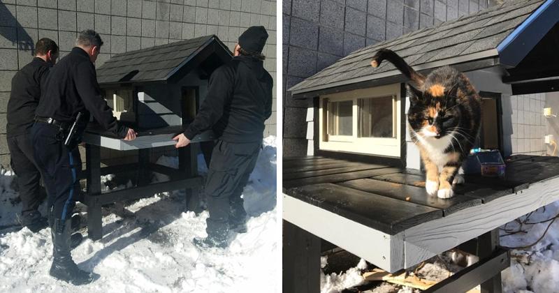Полицейский спецназ взял шефство над бездомной кошкой