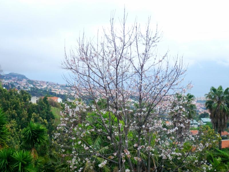 Мадейра-1.jpg