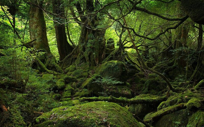 jungle-forest-