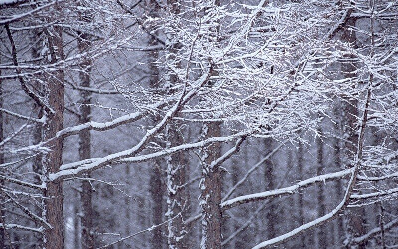 http://img-fotki.yandex.ru/get/9831/97761520.12e/0_81ccf_aa894d9_XL.jpg
