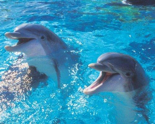 Отныне можно легко переводить и понимать язык дельфинов