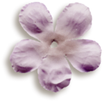 kimla_beloved_flower1_sh.png