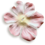 kimla_beloved_flower2_sh.png