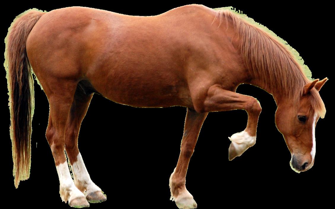 атласных конь картинки без фона эффективный препарат