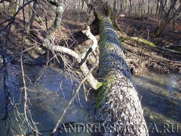Переправа через реку Адегой в хуторе Ахонка зимой