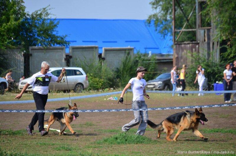 Выставка собак, стадион 'Авангард', 06 сентября 2015 года