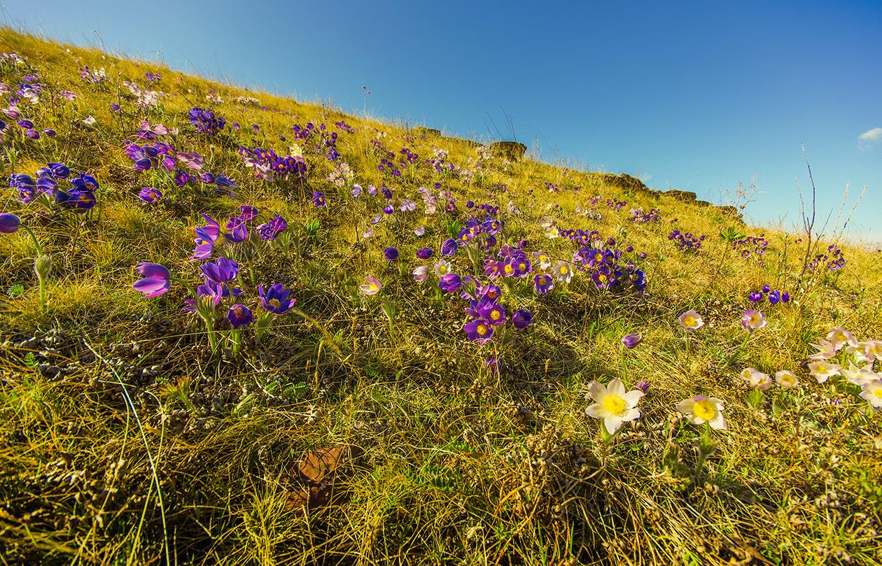 Цветы Хакасии
