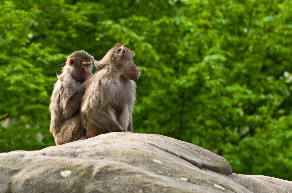 Фото 1. Зоопарк во Франкфурте. Снимаем на телевик - не привлекаем внимание объекта съемки. Камера Nikon D5100 с объективом Nikon 70-300.