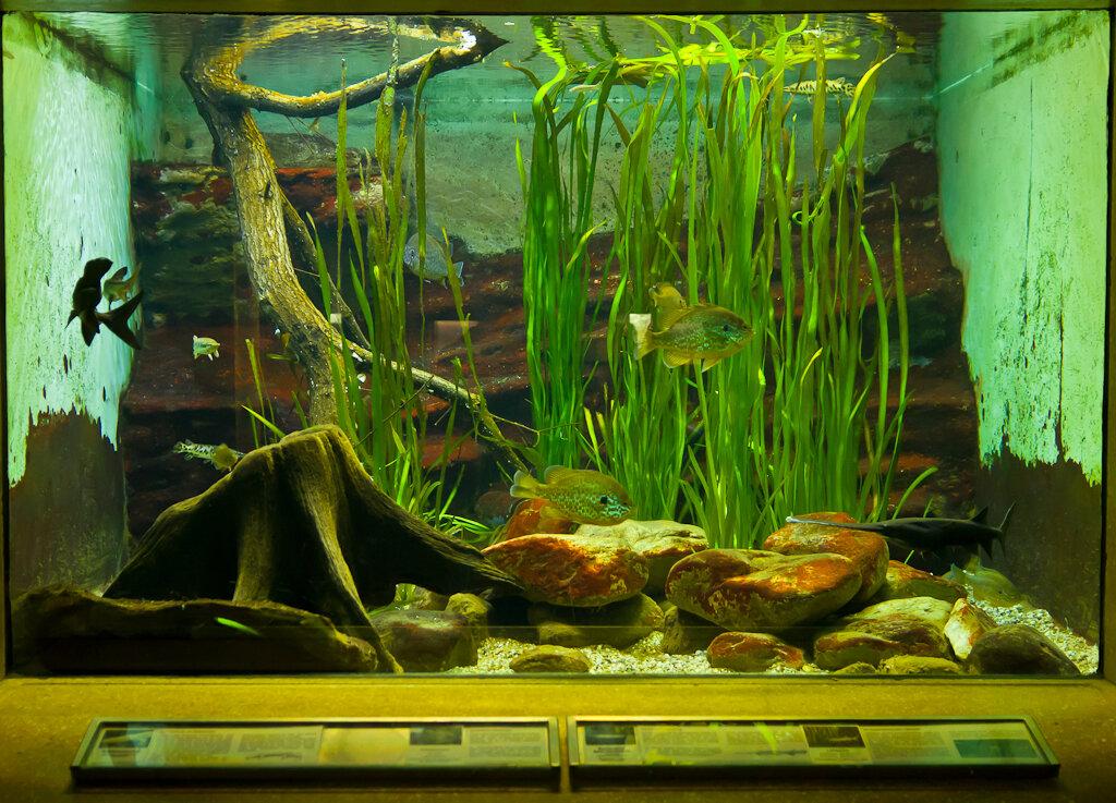 Фотография 12. Съемка аквариума с рук на Nikon D5100 и объектив Nikon 17-55/2,8.