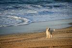 морской пёс