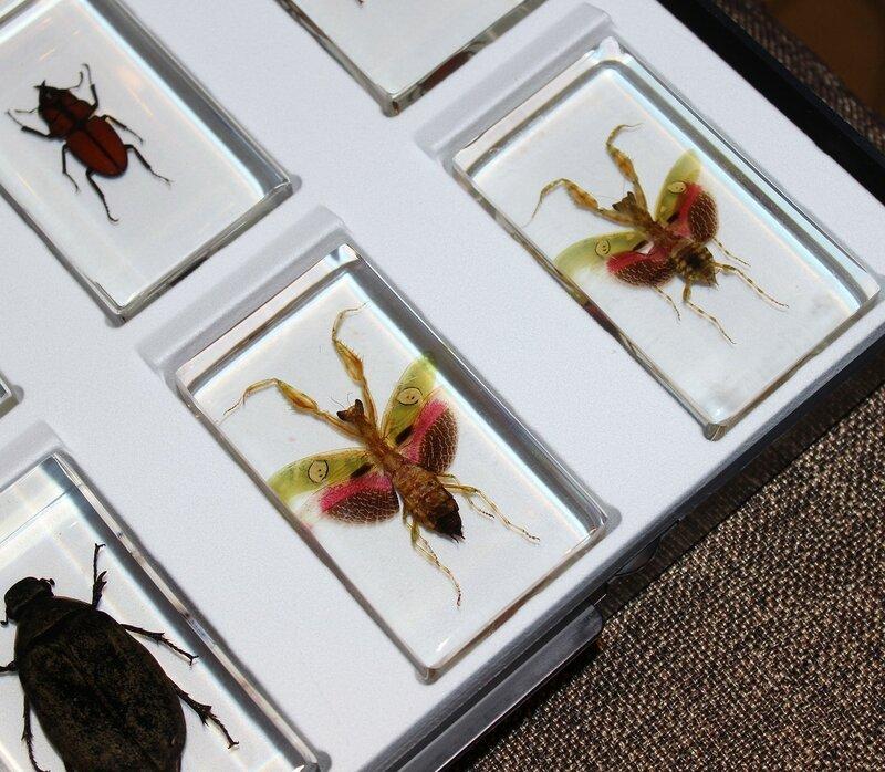 Насекомые №84 - Индийский цветочный богомол (Creobroter gemmatus)