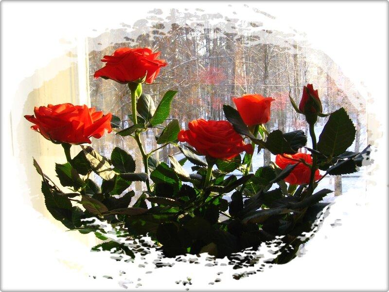 гифы для тебя зимние розы завершают