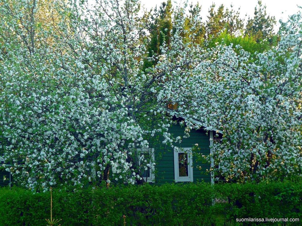 Цветущая Финляндия.