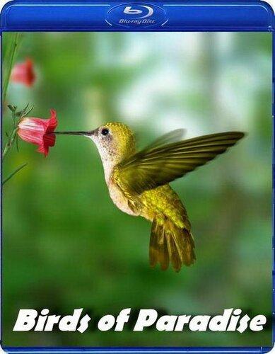 Живая природа. Райские птицы