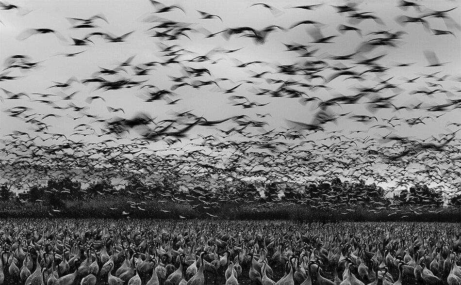 Черно белое фото задумчивых