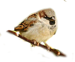 http://img-fotki.yandex.ru/get/9833/97761520.1e/0_7d646_b8f9b7a8_orig.png