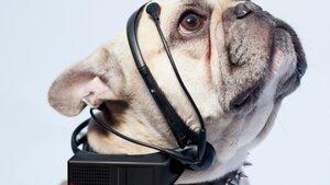 Устройство No More Woof прочитает базовые желания животного