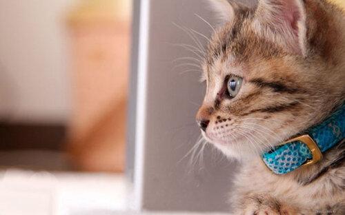 Насколько эффективны и так ли необходимы средства от блох для кошек?