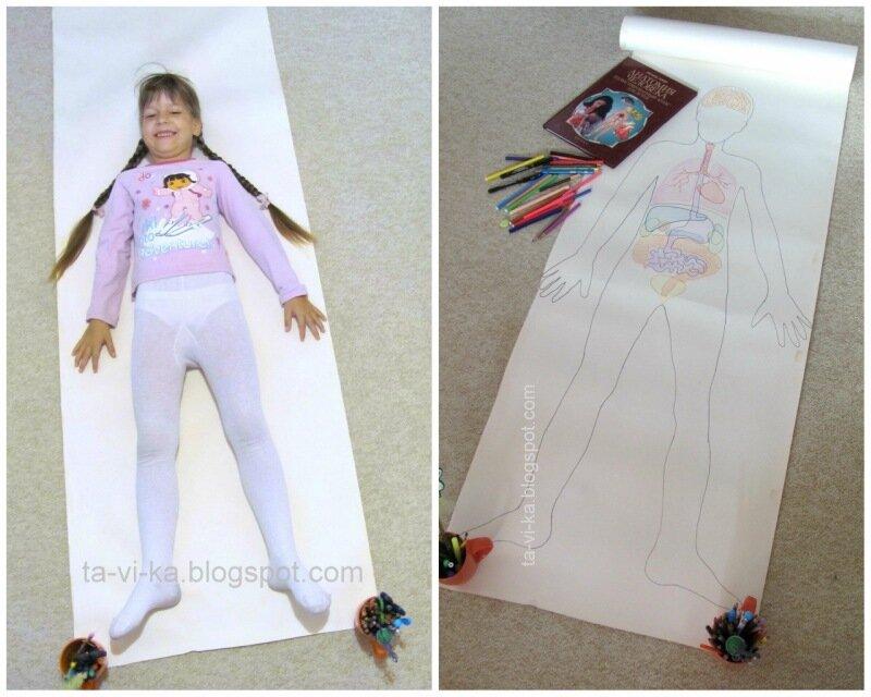 анатомия человека: занятие для дошкольников