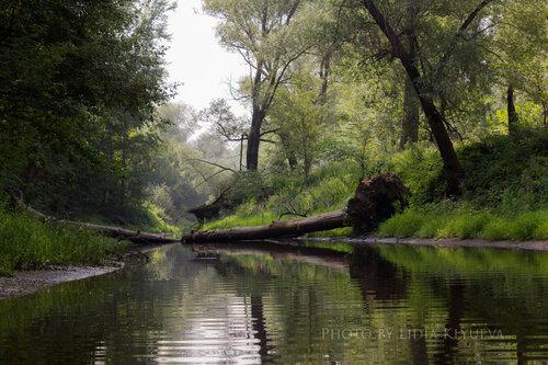 Путь закрыло упавшее дерево