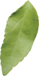 ldw_ShadesofSummer-leaf2.png